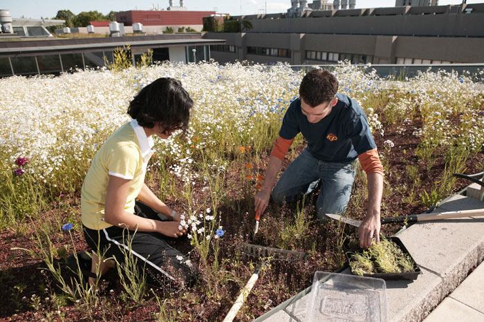 YORK UNIVERSITY - One of Canada's Greenest Employers